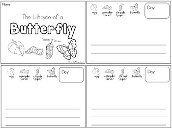 Life Cycle of a Butterfly Observation Journal