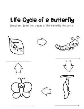 Life Cycle of a Butterfly Packet