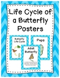 Life Cycle of a Butterfly Posters
