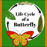 Life Cycle of a Butterfly Posters, Info Cards & Worksheets