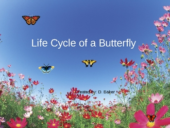 Life Cycle of a Butterfly Power Point Presentation