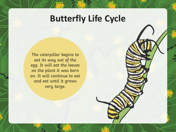 Life Cycle of a Butterfly PowerPoint