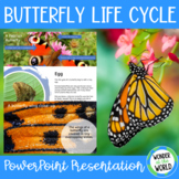 Life Cycle of a Butterfly PowerPoint Presentation (12 slides)