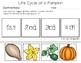 Life Cycle of a Pumpkin | PreK-K Worksheets | English