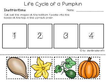 graphic regarding Pumpkin Life Cycle Printable identified as Lifetime Cycle of a Pumpkin PreK-K Worksheets English