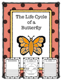 Life Cycle of a Butterfly Report Template