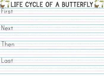 Life Cycle of a Butterfly - Sequence