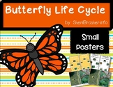 Life Cycle of a Butterfly | Sm Posters | English