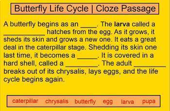 Life Cycle of a Butterfly | Smartboard Activity