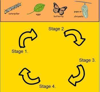 Life Cycle of a Butterfly   Smartboard Activity