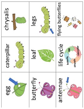 Life Cycle of a Butterfly Vocabulary Cards and Mini Books BUNDLE
