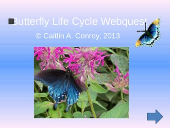 Life Cycle of a Butterfly Webquest