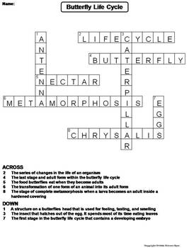life cycle of a butterfly worksheet crossword puzzle by science spot. Black Bedroom Furniture Sets. Home Design Ideas
