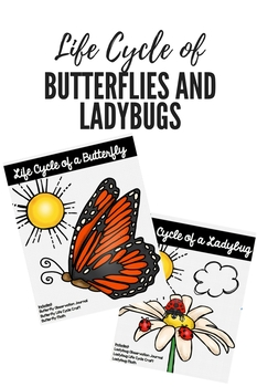 Life Cycle of a Butterfly and Ladybug