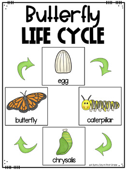 Life Cycle of a Butterfly {posters, printables, craft ...