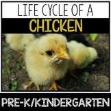 Life Cycle of a Chick and Chicken