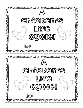 Life Cycle of a Chicken!