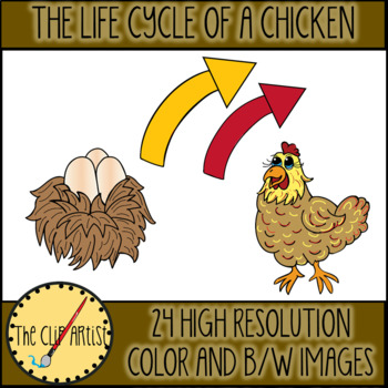 Life Cycle of a Chicken Clip Art