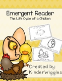 Life Cycle of a Chicken Book