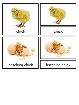 Life Cycle of a Chicken Montessori 3-part cards