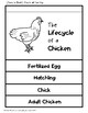 Life Cycle of a Chicken Poster and Flipbook