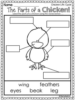 Life Cycle of a Chicken by Sheila Melton | Teachers Pay Teachers