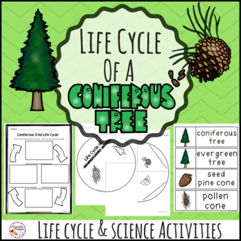 Life Cycle of Coniferous Trees Evergreen Tree Science