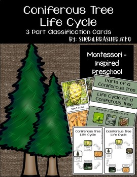 Life Cycle of a Coniferous Tree | 3 Part Cards PreK | English