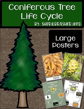 Life Cycle of a Coniferous Tree | Lg Posters | English