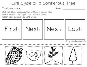 Life Cycle of a Coniferous Tree | PreK-K Worksheets | English
