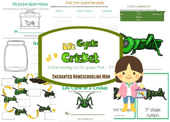Life Cycle of a Cricket Learning Pack