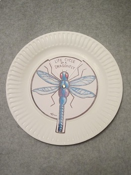 Life Cycle of a Dragonfly. Fun Paper Plate Craft Art