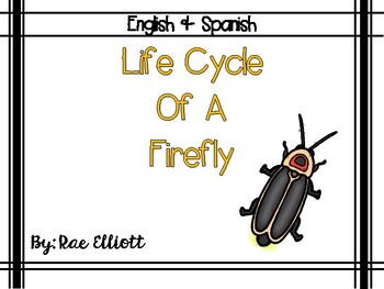 Life Cycle Of A Firefly Bilingual By Rae Elliott Tpt