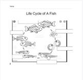 Life Cycle of a Fish