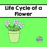 Life Cycle of a Flower