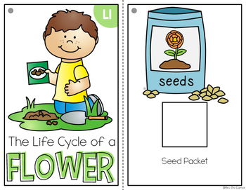 Life Cycle of a Flower Adapted Book { Level 1 and Level 2 } Plant Life Cycle