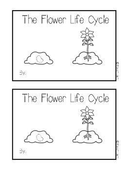 Life Cycle of a Flower Bundle