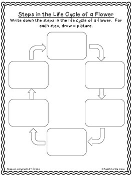 Life Cycle of a Flower Close Reading 3-6 Grade Text/Graphic Organizers
