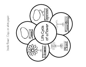 Life Cycle of a Flower Craft-Ciclo de vida de la flor