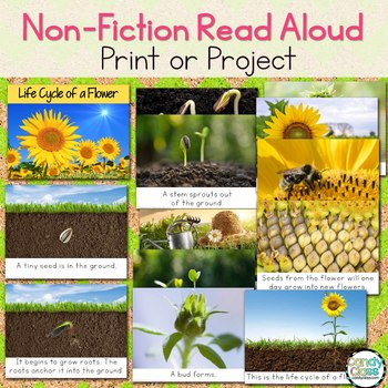 Life Cycle of a Flower Craft & Non-Fiction Read Aloud
