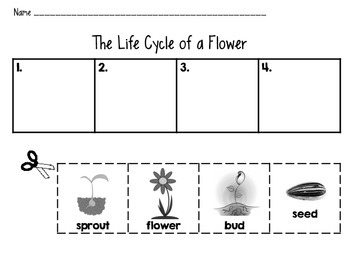 """Life Cycle of a Flower"" Sequencing Handout"