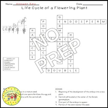 Life Cycle of a Flowering Plant Biology Science Crossword Coloring Middle School