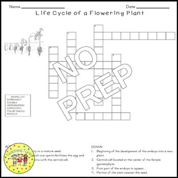 Life Cycle of a Flowering Plant Crossword Puzzle