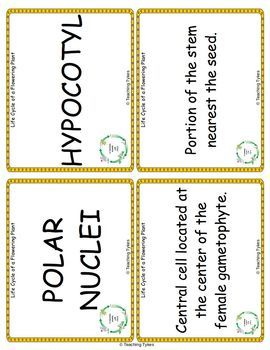 Life Cycle of a Flowering Plant Vocabulary Cards