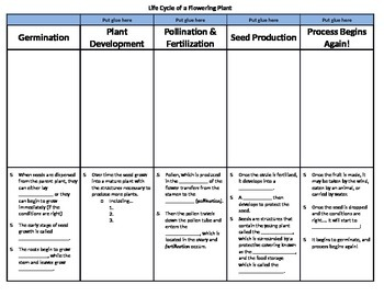 Life Cycle of a Flowering Plant Foldable
