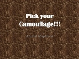 Pick Your Camouflage