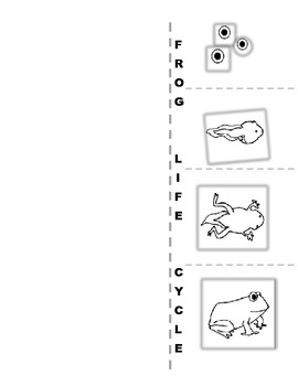 Life Cycle of a Frog - 14 pages