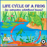 Life Cycle of a Frog - an Interactive SmartBoard and White
