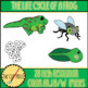 Life Cycle of a Frog Clip Art