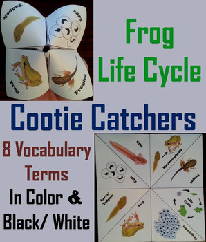 Life Cycle of a Frog Activity/ Foldable